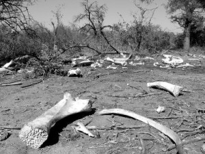 Kuburan Gajah