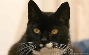 Kucing Tertua Di Dunia