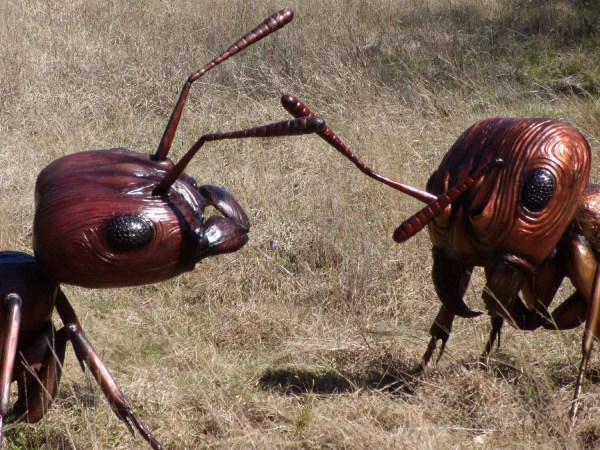Semut Api